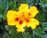 黄色の花写真