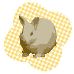 ウサギとオレンジのチェック背景