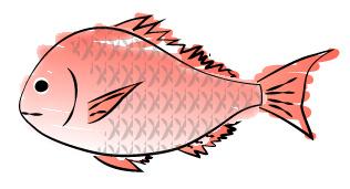 水彩画風の鯛