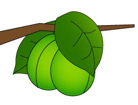 梅の実2個と葉