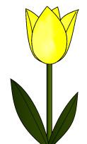 春に咲く黄色のチューリップ