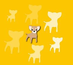 小型犬チワワのスマホ壁紙