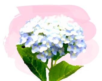 梅雨に咲く水色のアジサイ/水彩画風