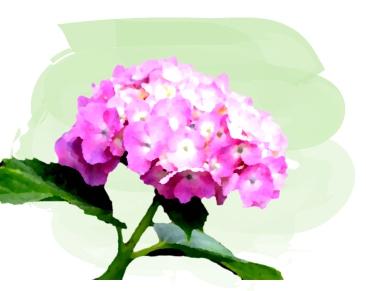 水彩画風のピンク色のアジサイ