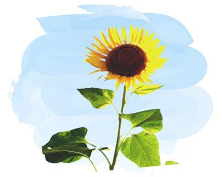 水彩画風の夏に咲くヒマワリ