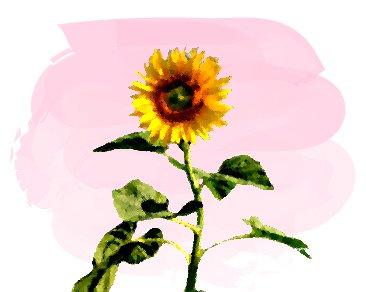 ピンクの背景と夏の向日葵の油絵風