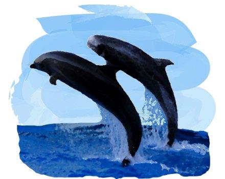 水しぶきを上げて飛び跳ねるイルカと海