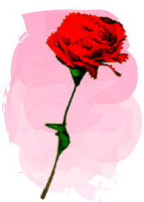 母の日に贈るお花