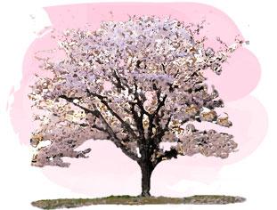 桜の木の水彩画風