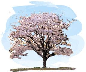 青空と桜の木の絵画風