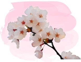 ピンク/水彩画風