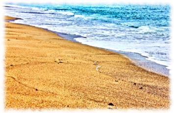 穏やかな波打ち際と砂浜