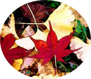 地面に落ちた紅葉と銀杏