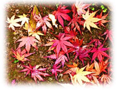 地面に落ちてるたくさんの紅葉