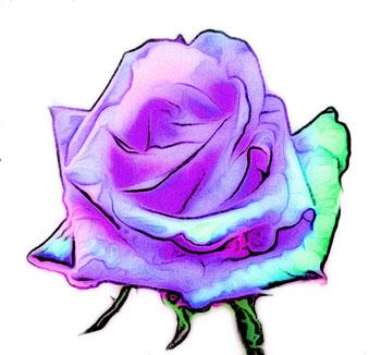 紫と青の花