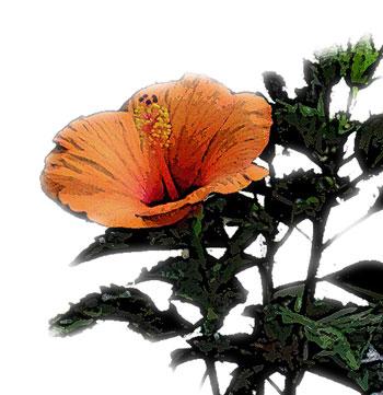 暖かい地方で咲く花オレンジ