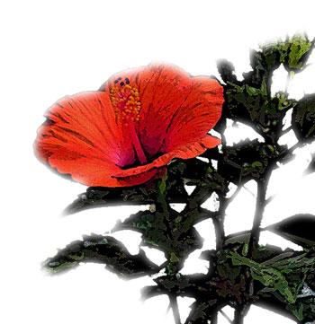 暖かい地方で咲く花レッド
