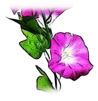 朝に咲く紫花