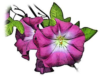 赤紫色の花とツルと葉