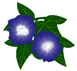 アサガオ紺色と葉