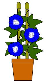ガーデニング用鉢植えアサガオ