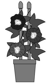 白黒カラー鉢植え