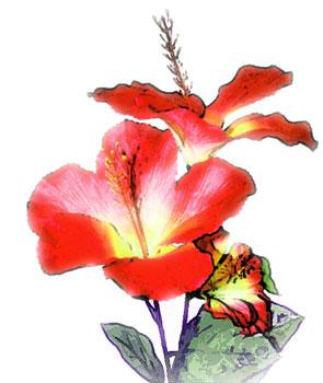 暖かい地方で咲くハイビスカス