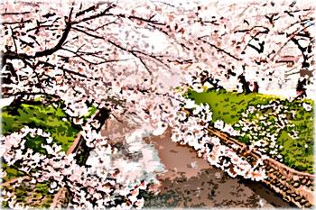 小川の土手のサクラ並木