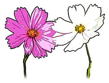 2対ピンクと白