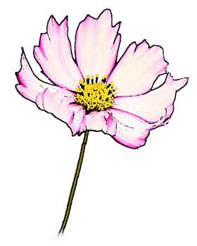 ピンクと白のブレンド