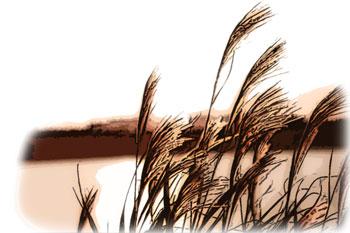 ススキと川のシルエット