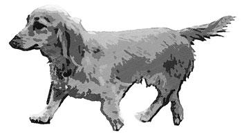 歩く胴長犬白黒