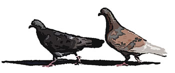 前後に並んで歩く2羽の鳥