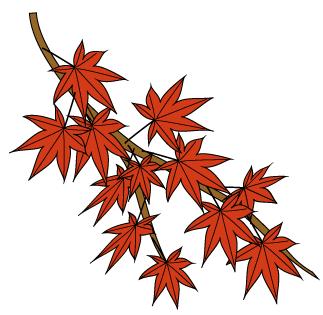秋のこうよう枝