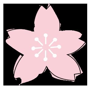 一重咲きの桜