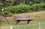 公園とベンチと芝生と松の木の写真素材