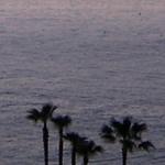 夕暮れの海とヤシの木の写真素材