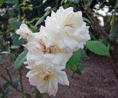 白色の花の写真