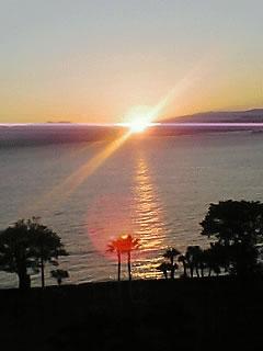 夕日と海とヤシの木の風景の拡大写真