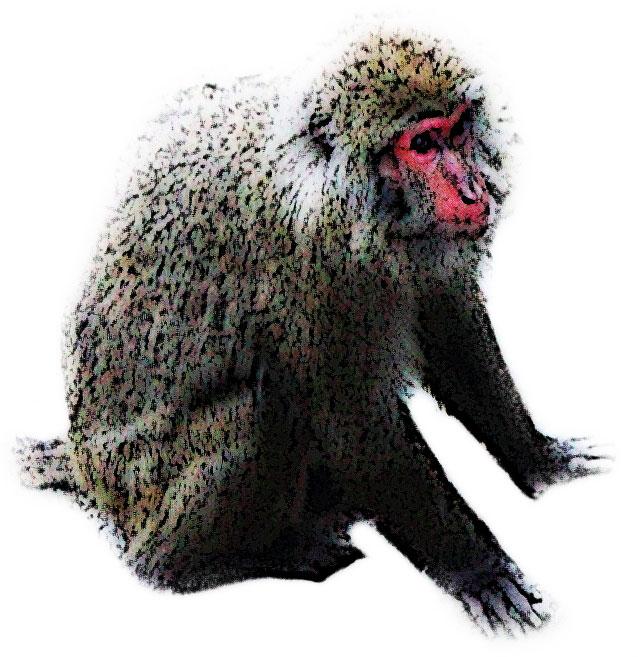 大きいサイズのしゃがむ猿