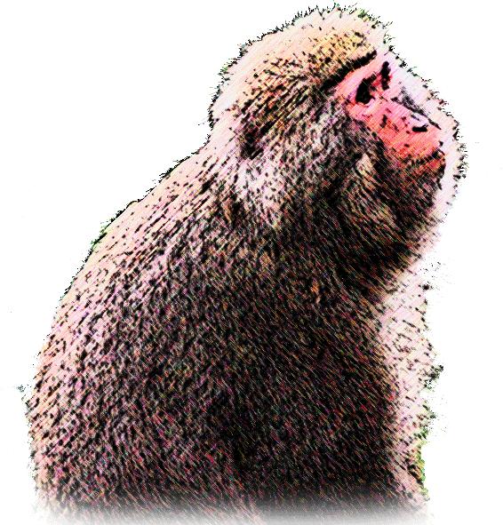 大きいサイズの上を見上げる猿