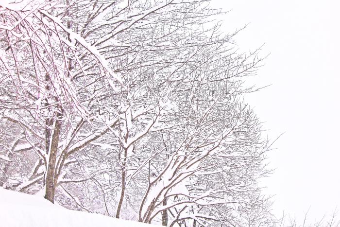 大きいサイズの樹氷