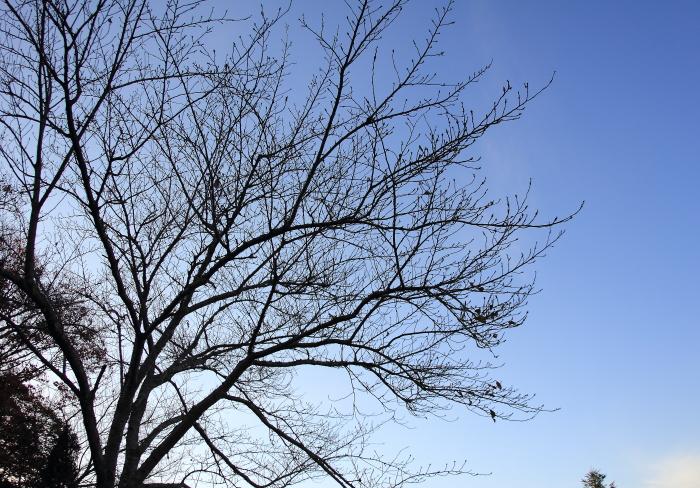 大きいサイズの冬の木立と青空