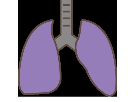 大きいサイズの肺(シンプル)