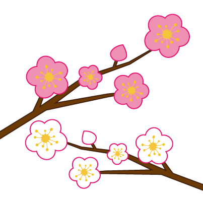 大きいサイズの白とピンク色の梅の花
