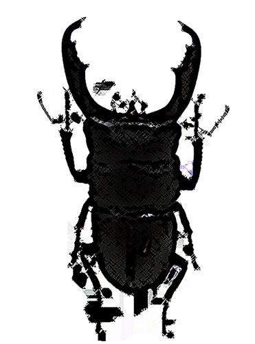 大きいサイズのオオヒラタ
