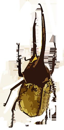 大きいサイズのヘラクレスオオツノカブト