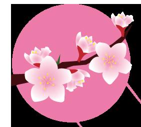 フリー素材桃
