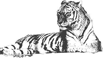 モノクロのトラ