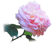 ふんわりとした淡いピンク